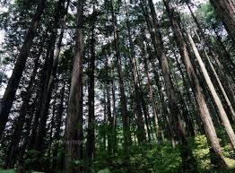 森林�B.jpg